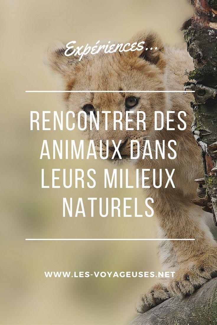 Expériences pour rencontrer des animaux dans leurs milieux naturels