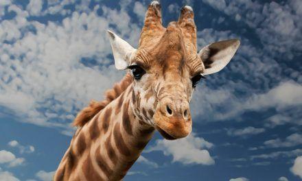 Voyage responsable: rencontrer des animaux dans leur milieux naturels et non dans une cage!