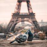Ton City-Guide de Paris : l'essentiel pour découvrir la ville lumière