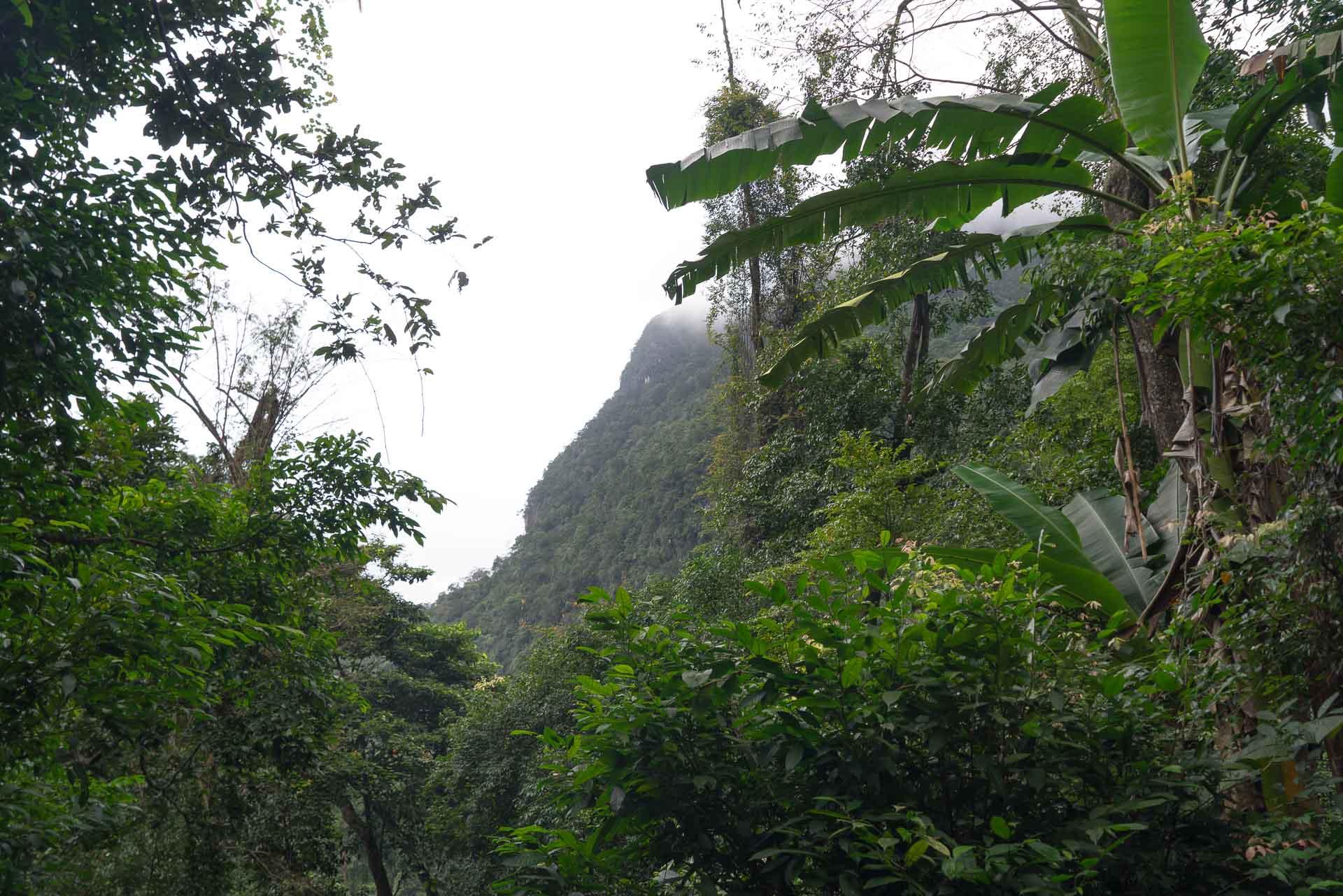 LesVoyageuses-Vietnam-Phong-Nha-Caves-Nature-19