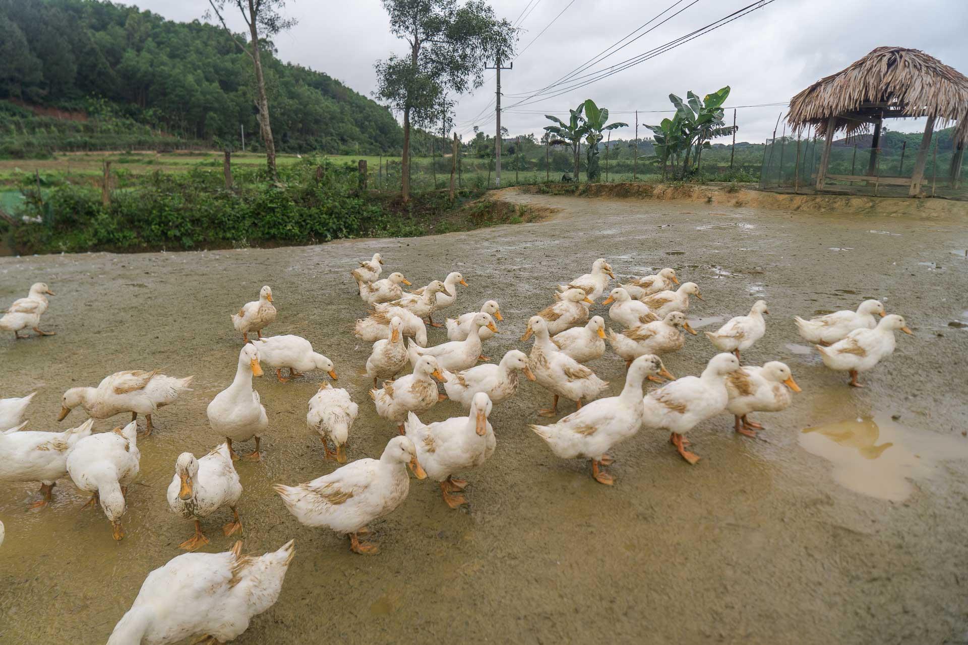 LesVoyageuses-Vietnam-Phong-Nha-Caves-Nature-93