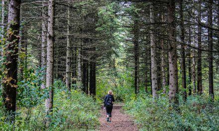 Équipement et accessoires de randonnée : Les indispensables