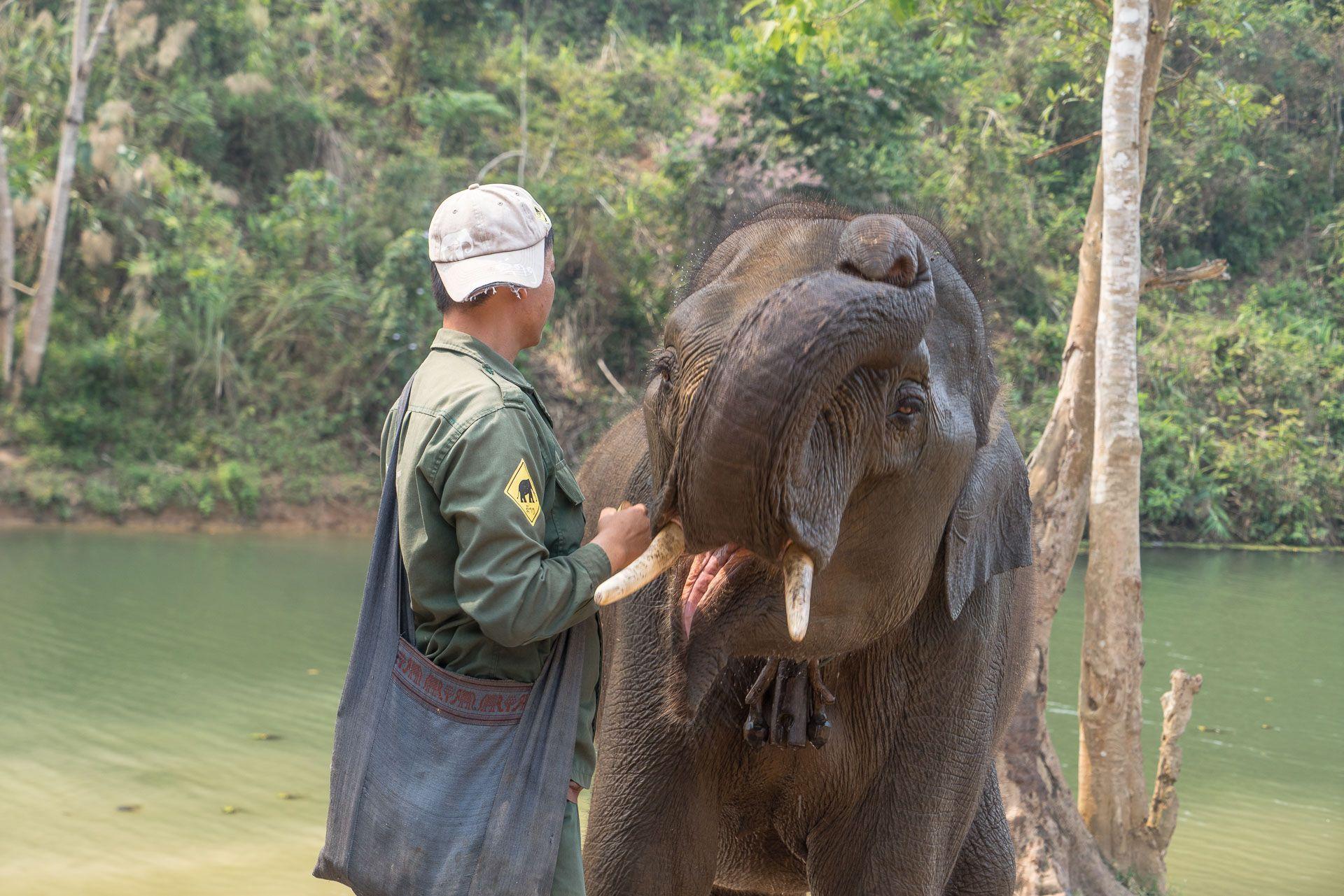 Lesvoyageuses-volontariat-centre-conservation-elephants-laos-105