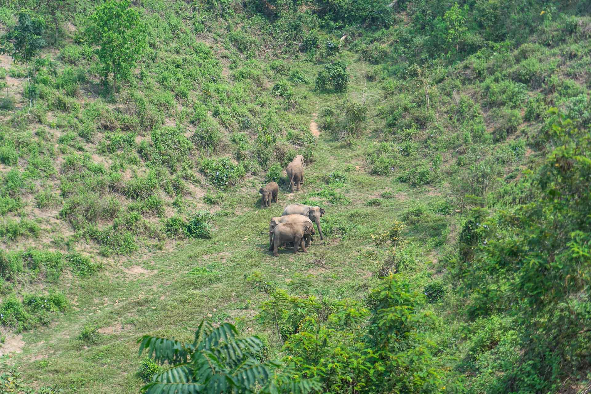Lesvoyageuses-volontariat-centre-conservation-elephants-laos-108