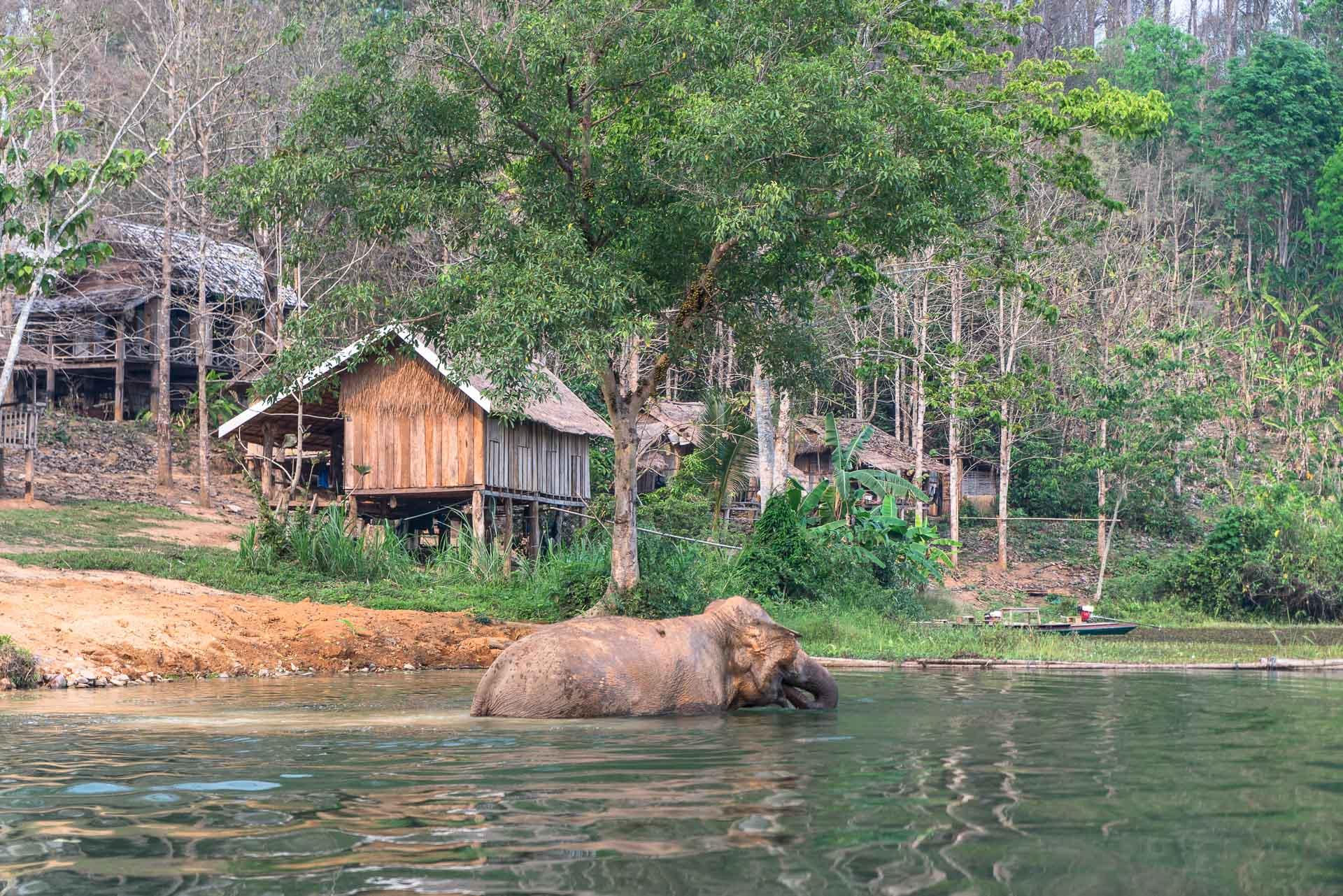 Lesvoyageuses-volontariat-centre-conservation-elephants-laos-123