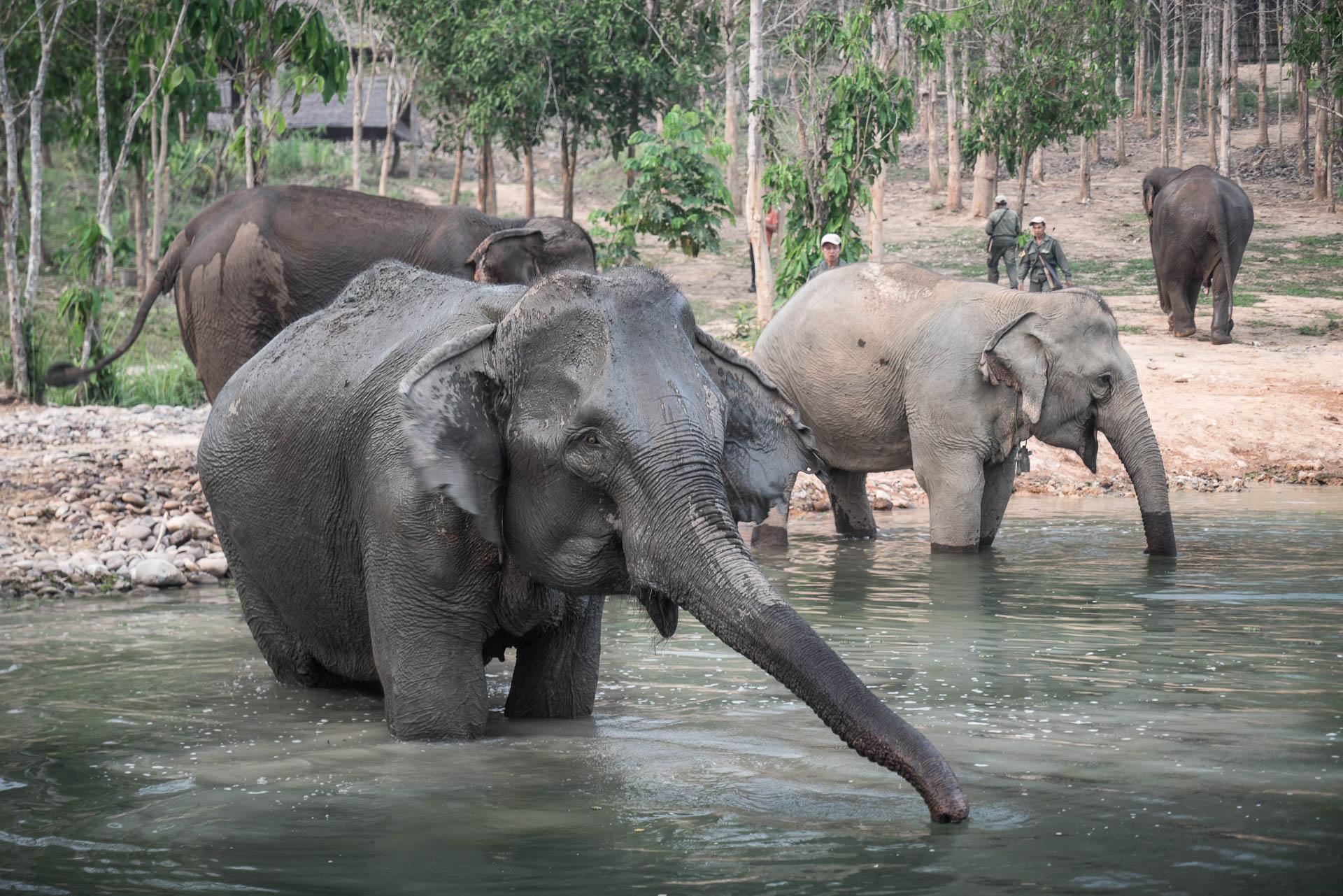 Lesvoyageuses-volontariat-centre-conservation-elephants-laos-124