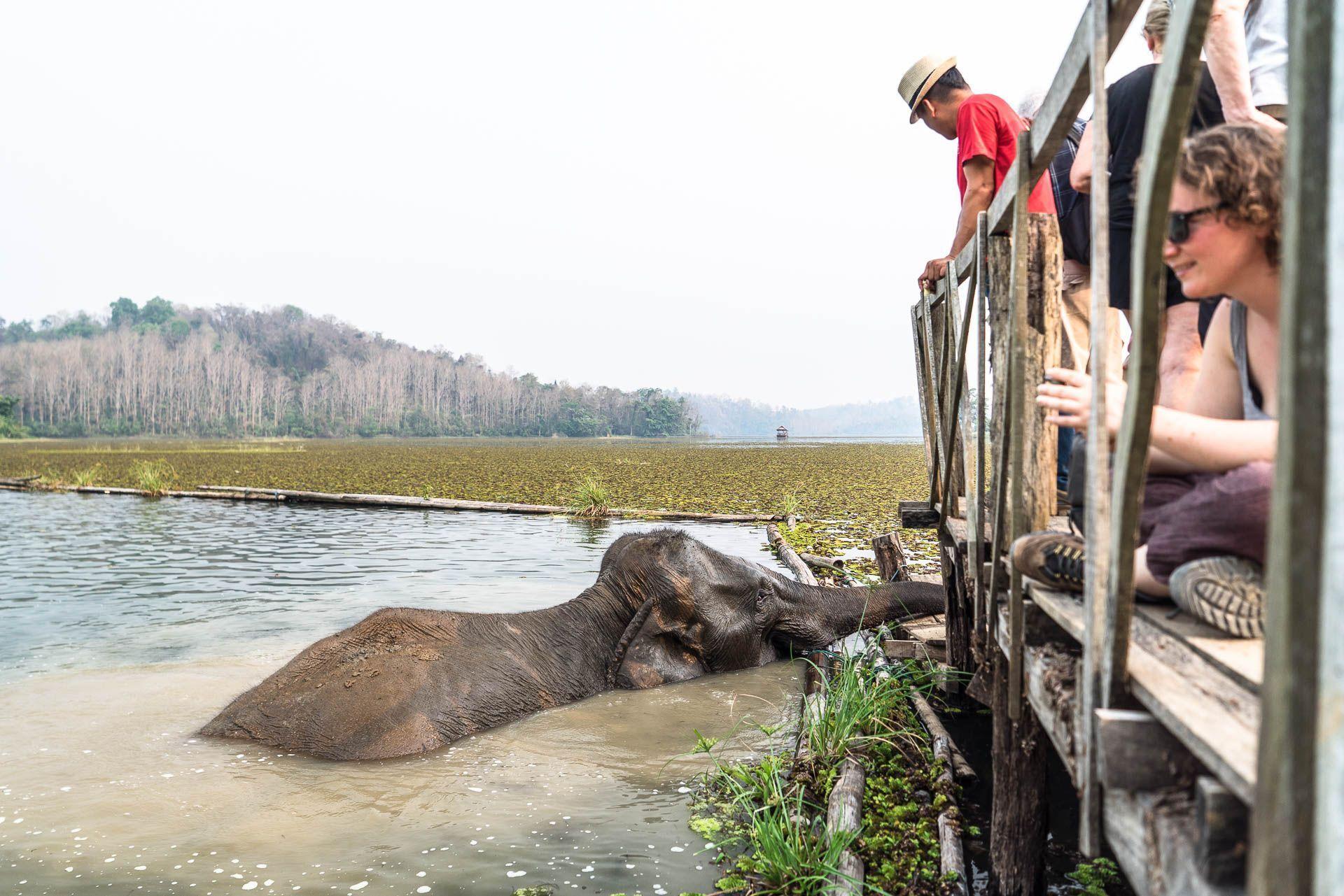 Lesvoyageuses-volontariat-centre-conservation-elephants-laos-134
