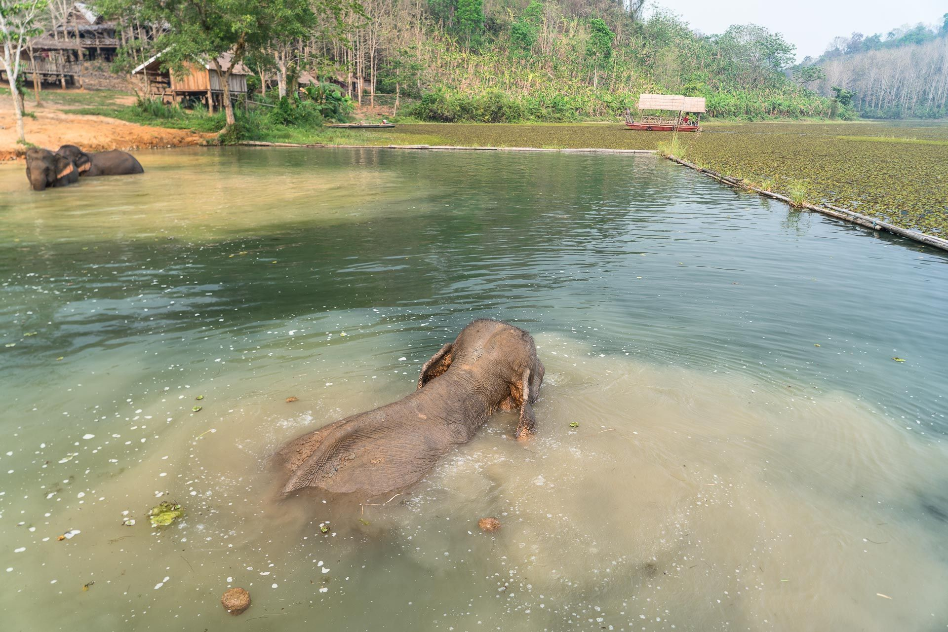 Lesvoyageuses-volontariat-centre-conservation-elephants-laos-142