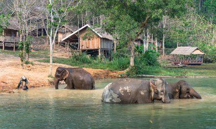 Coup de coeur au Laos : Volontariat au Centre de conservation d'éléphants