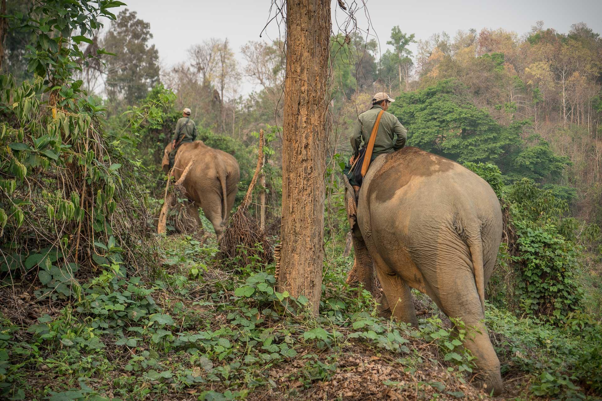 Lesvoyageuses-volontariat-centre-conservation-elephants-laos-39