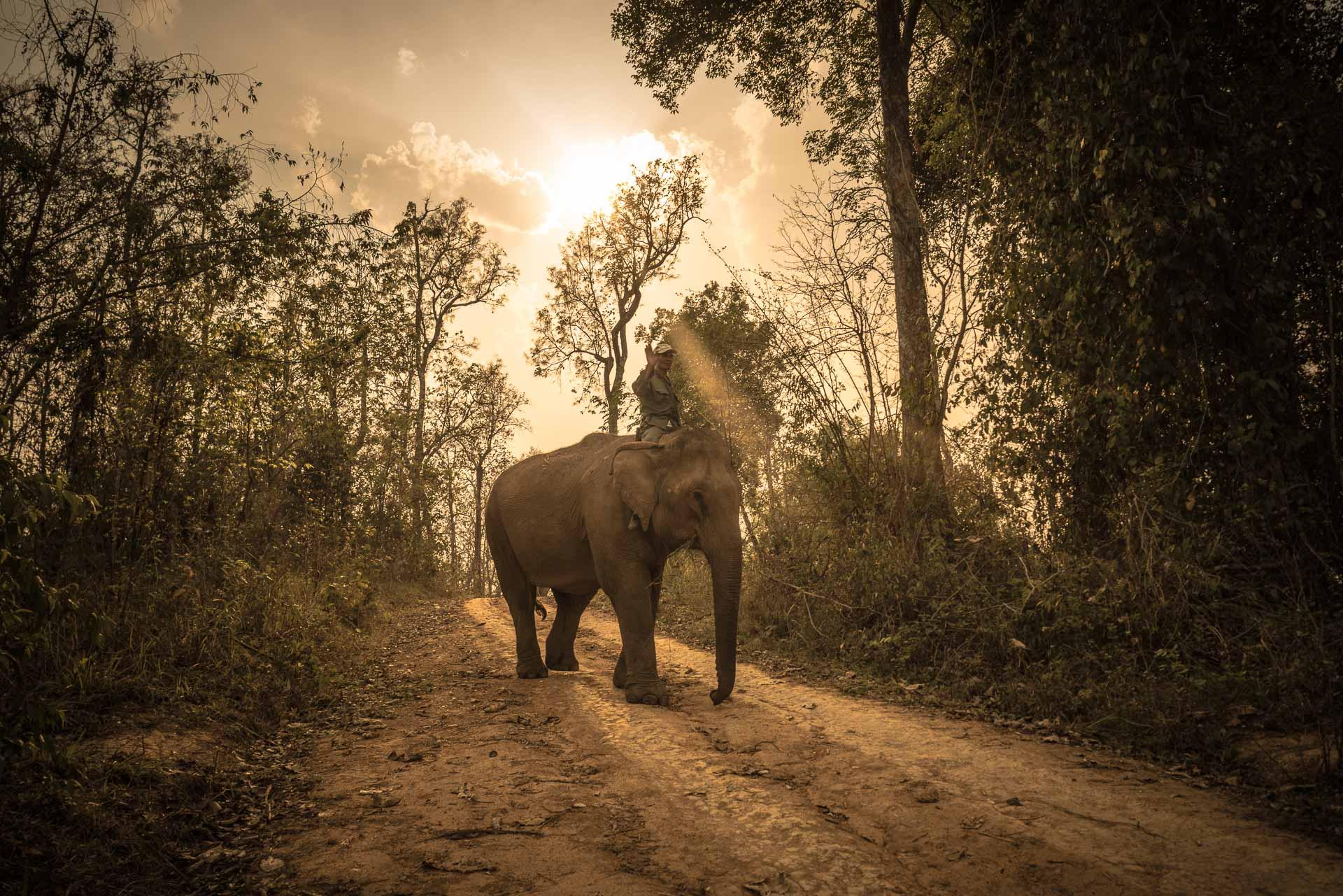 Lesvoyageuses-volontariat-centre-conservation-elephants-laos-64