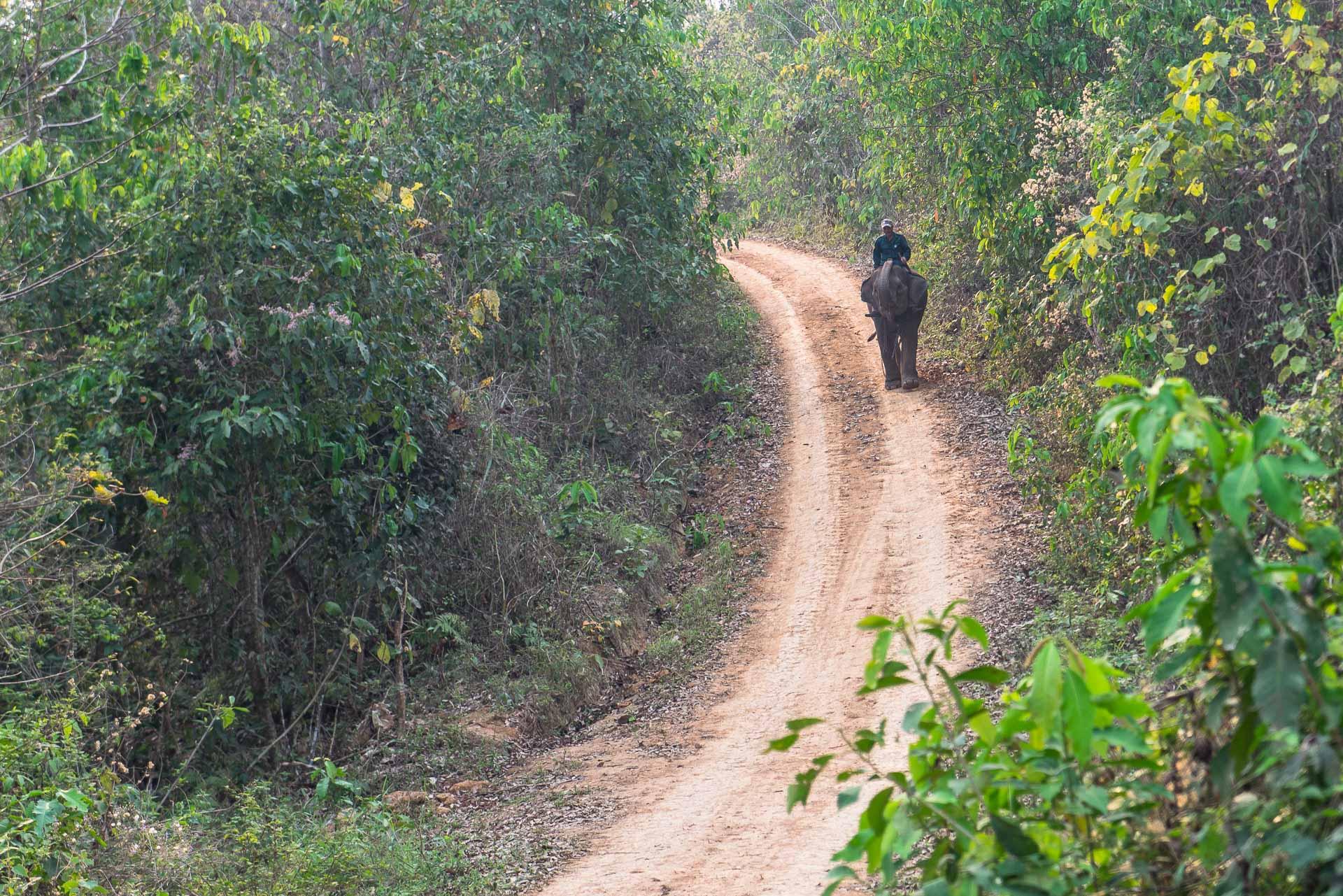 Lesvoyageuses-volontariat-centre-conservation-elephants-laos-66