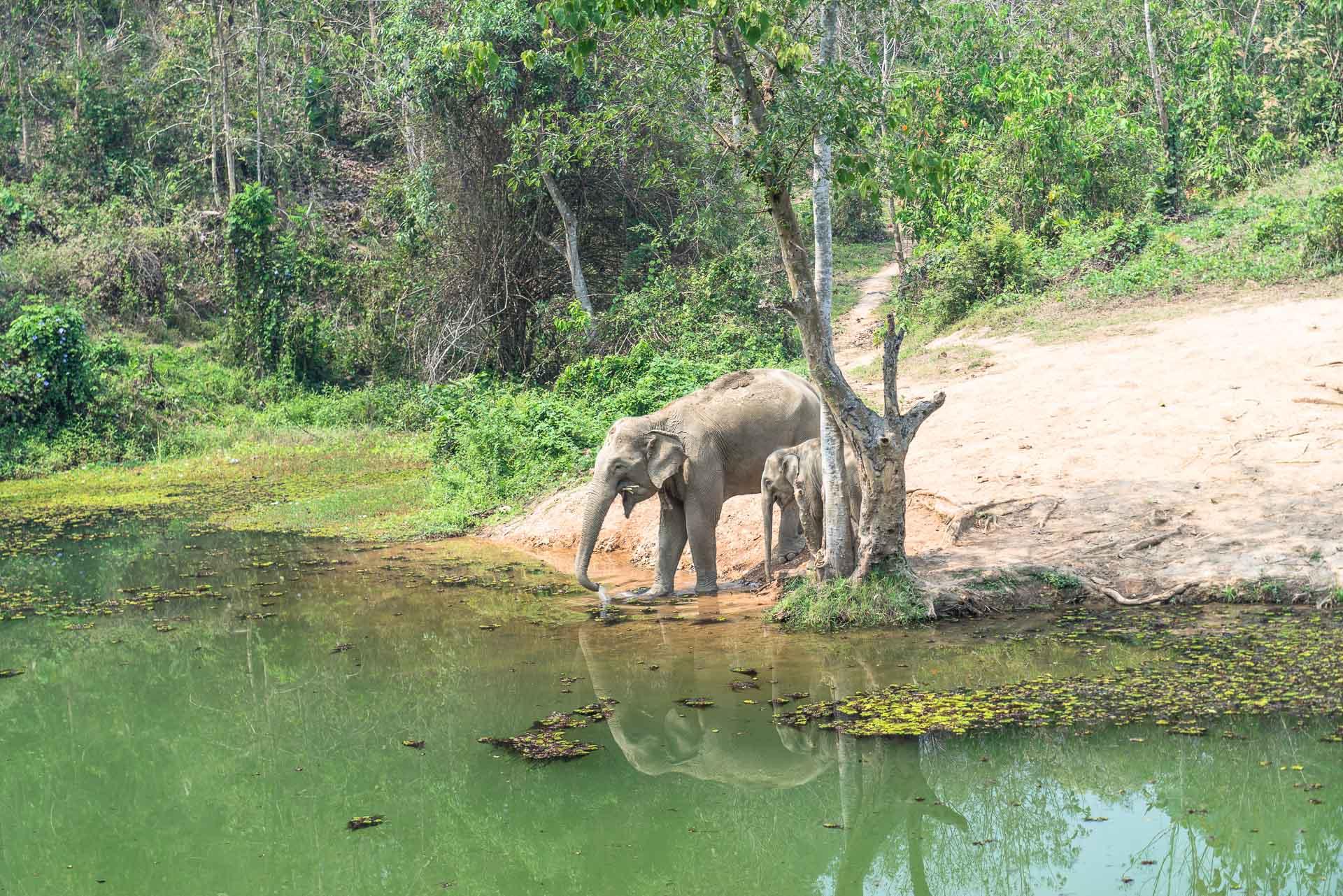 Lesvoyageuses-volontariat-centre-conservation-elephants-laos-9