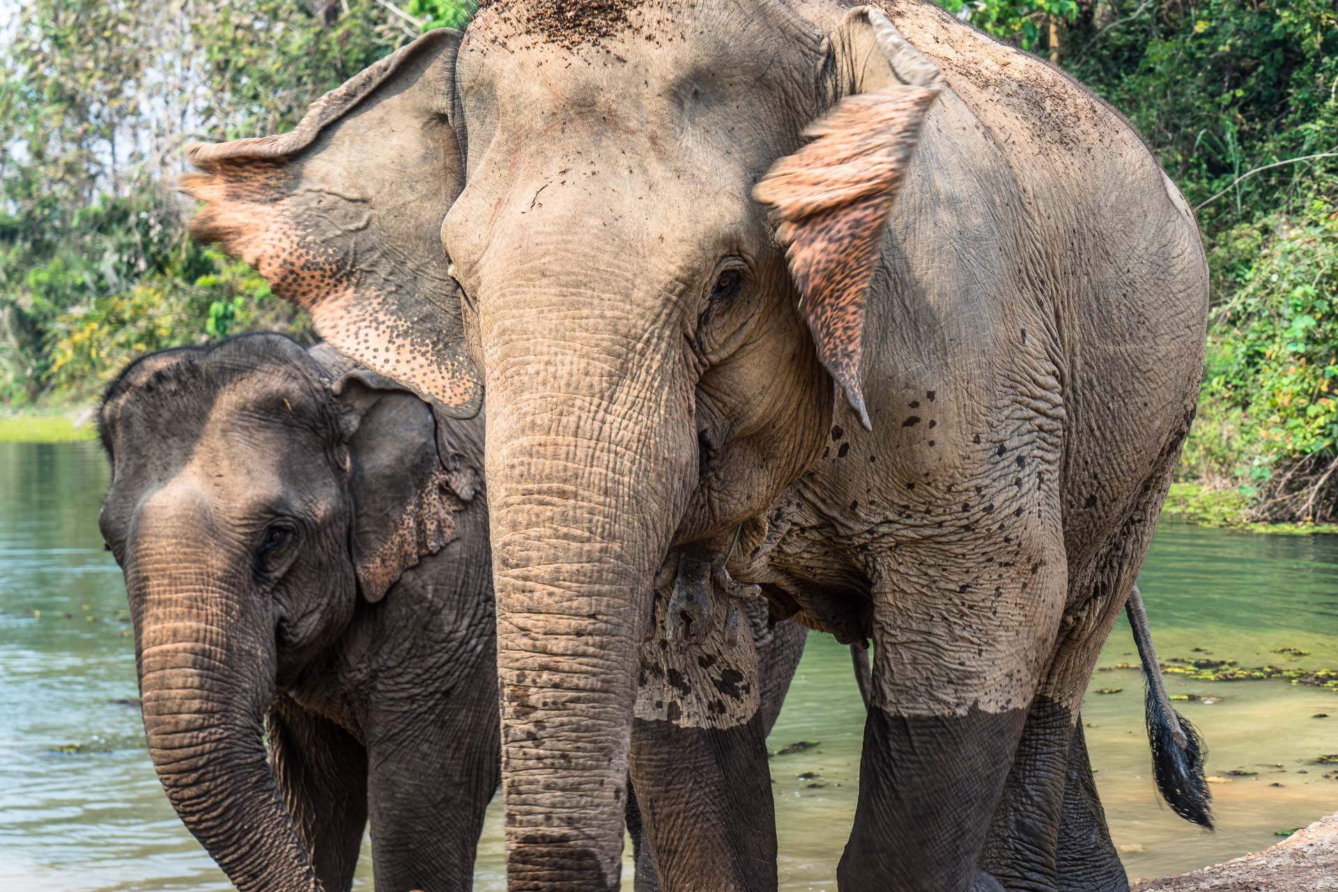Lesvoyageuses-volontariat-centre-conservation-elephants-laos-92