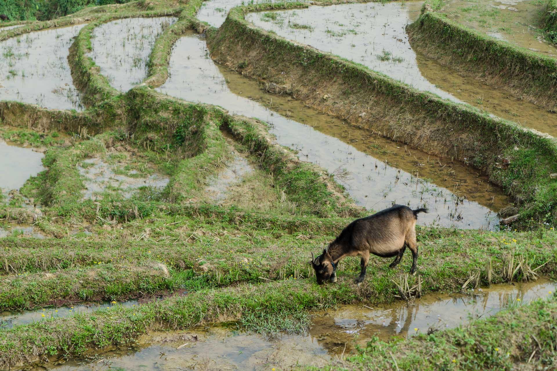 lesvoyageuses-trek-sapa-minorites-ethniques-itineraire-vietnam-15