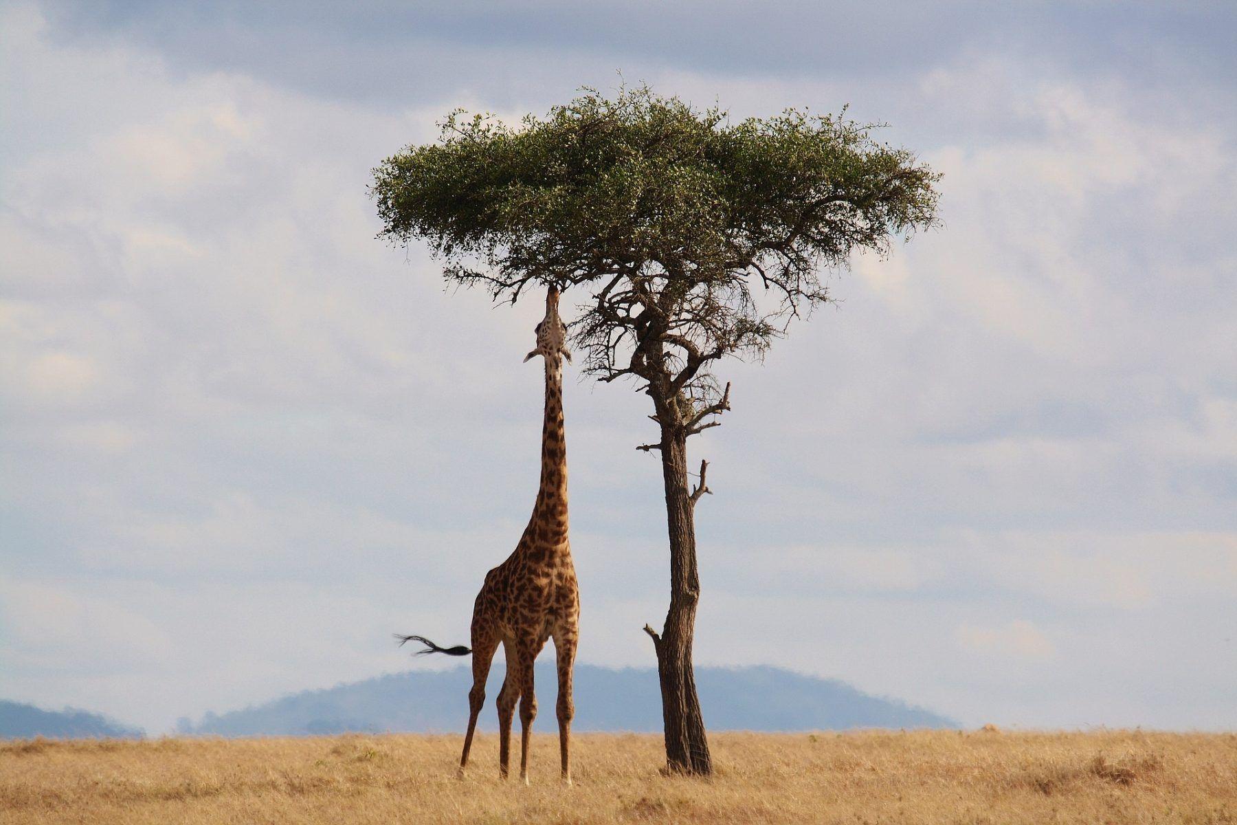 10 Bonnes raisons pour voyager en Afrique